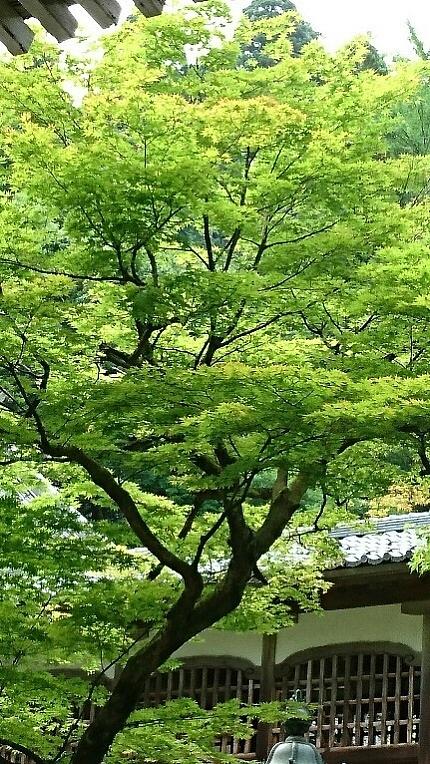 永平寺を楽しむ (2)