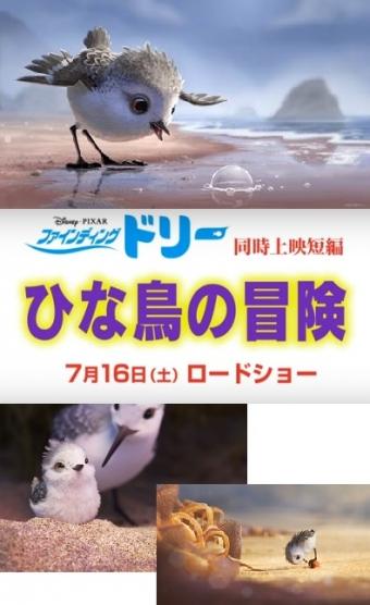 ひな鳥の冒険0001