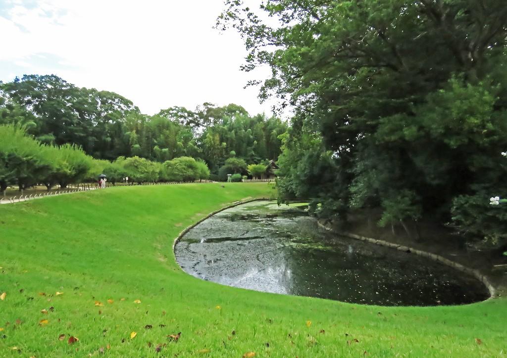 s-20160904 後楽園花交の池の藻の花 (1)