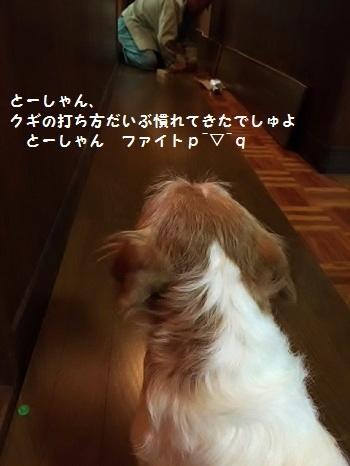 IMG_3793_2016102222182438d.jpg