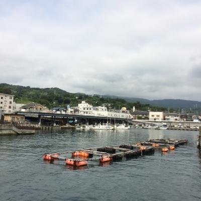 早川港のイカダ