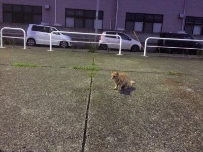 城ケ島の猫