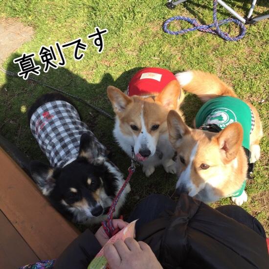 fc2blog_201605222042423ae.jpg