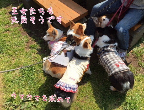 fc2blog_2016052220444757d.jpg