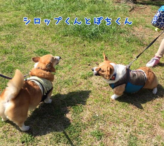 fc2blog_20160522204526624.jpg