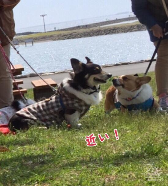 fc2blog_2016052220460377a.jpg