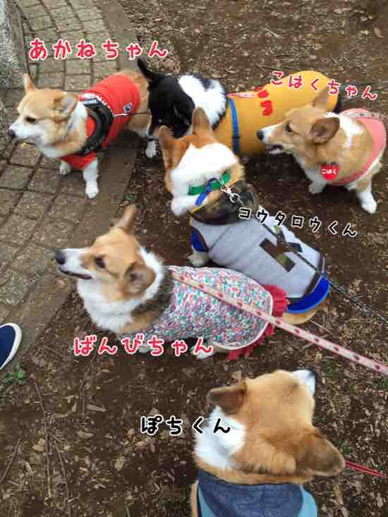 fc2blog_20160605104427845.jpg