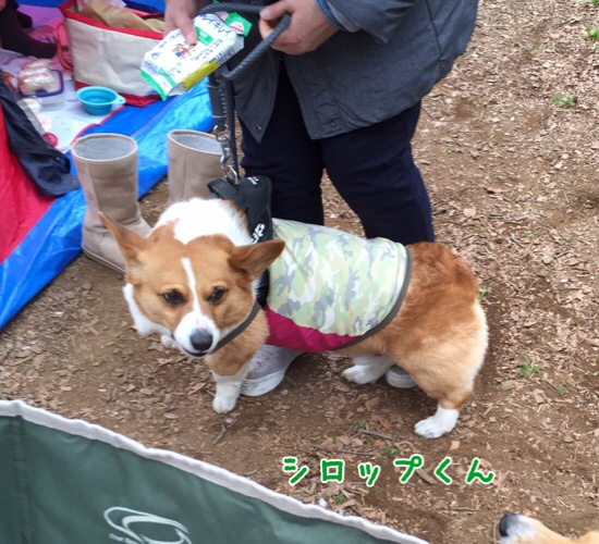 fc2blog_20160605104820f4c.jpg