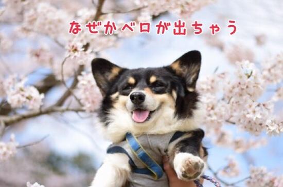 fc2blog_20160608185933f0b.jpg