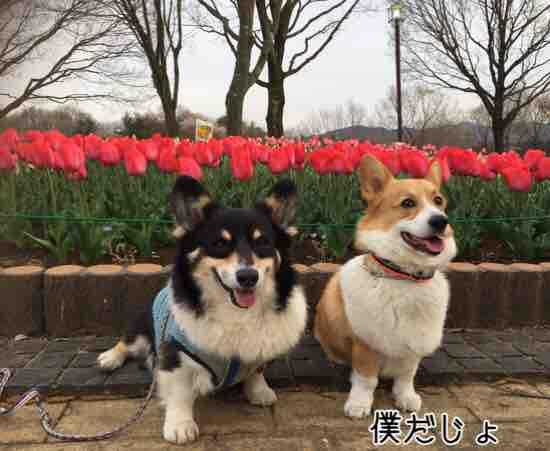 fc2blog_20160611005736867.jpg