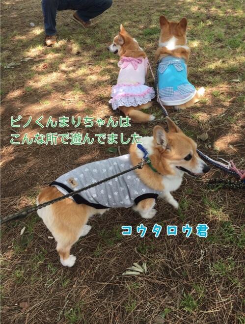 fc2blog_20160626130456711.jpg