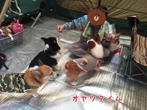 fc2blog_20160808100606ec8.jpg
