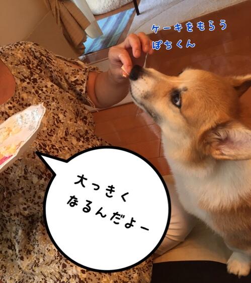 fc2blog_20160812163408784.jpg