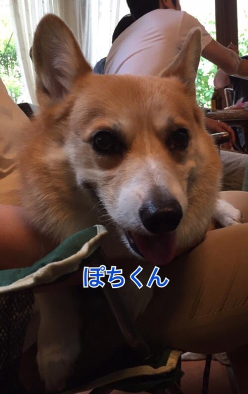 fc2blog_201608121639194ff.jpg