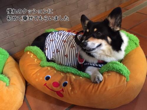 fc2blog_20160812164041aba.jpg
