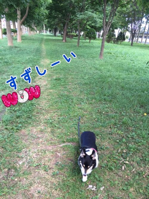 fc2blog_20160911125628529.jpg