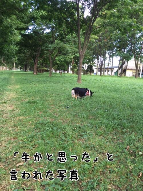 fc2blog_20160911125645297.jpg