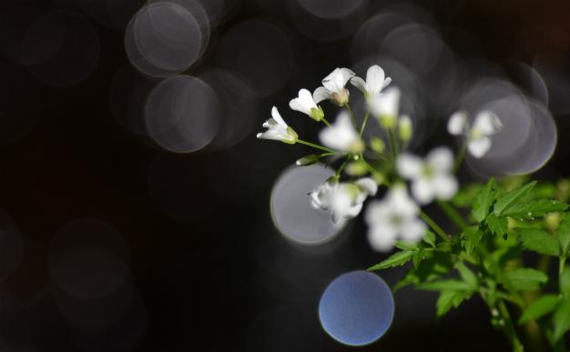 渓流に咲く花なんだろう?