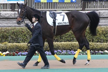 【競馬ネタ】競馬初心者だけど、パドックって黒毛の馬が異常に強そうに見えてしまう