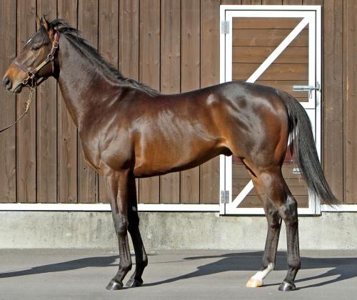 【日本競馬史上最強馬】トゥザクラウンが今週、ついに入厩するぞ!!!!