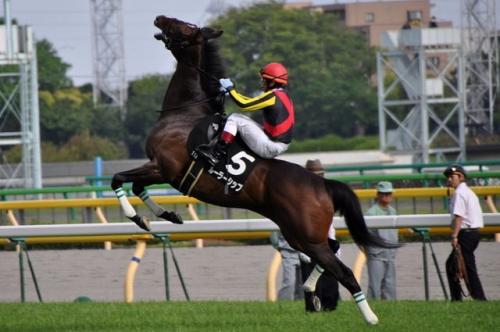 【競馬】ルーラーシップ、繁殖に恵まれずとも頑張っている