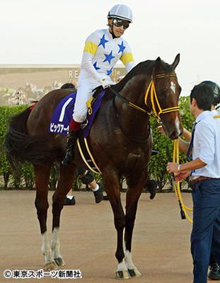 【競馬】ビッグアーサーの次走は香港スプリント