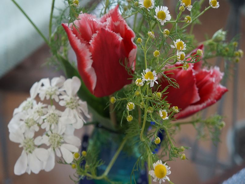 朝撮りの切り花