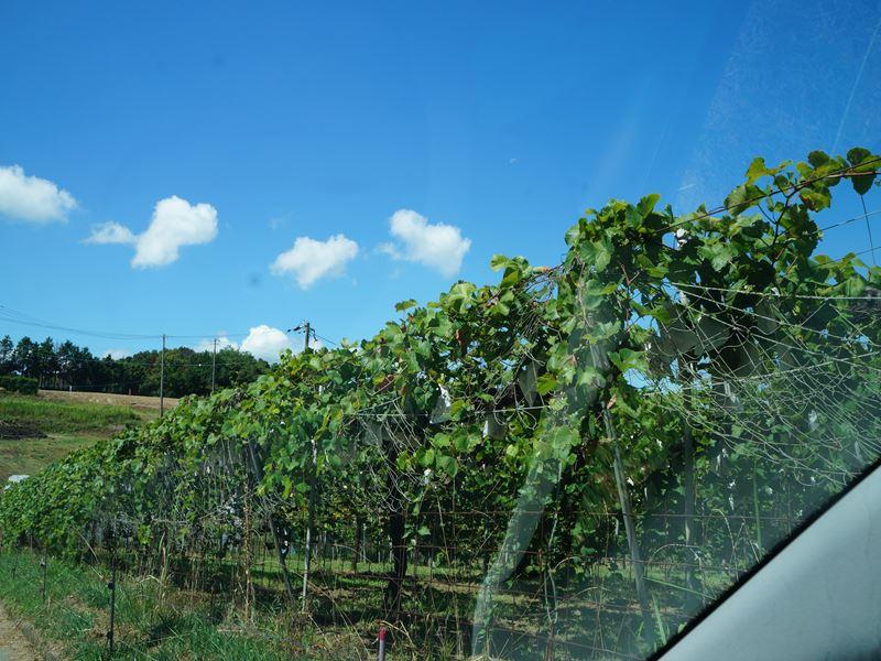 山の葡萄園