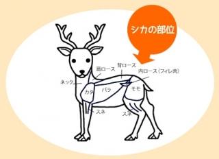 item_shikabui.jpg
