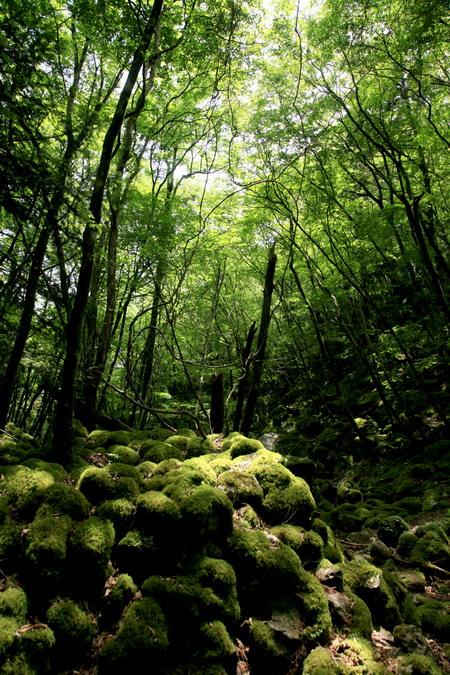 IMG_9204苔の森