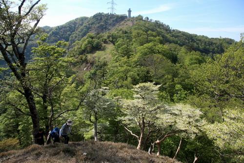 IMG_9211高城山とシロヤシオ