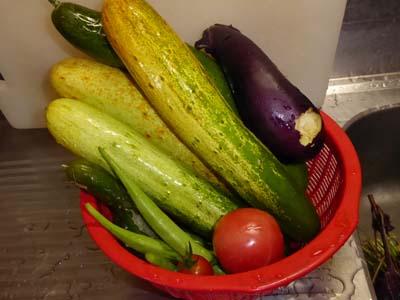 収穫した野菜 7/23