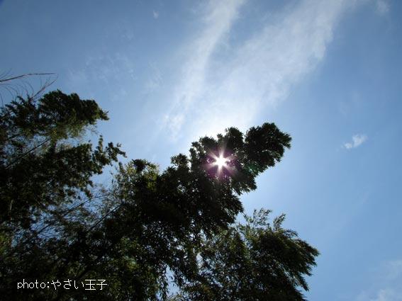 IMG_5147_201605211250176bf.jpg
