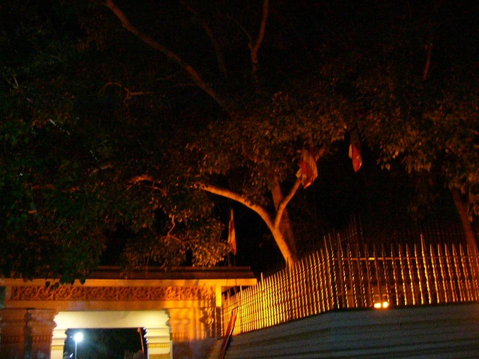 3菩提樹P1000527
