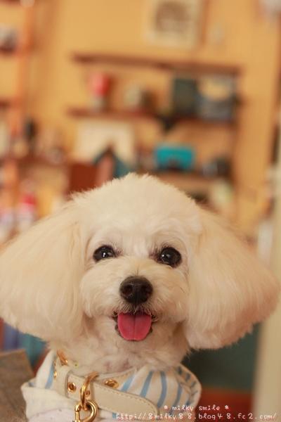 ♪ ミルキー Smile ♪