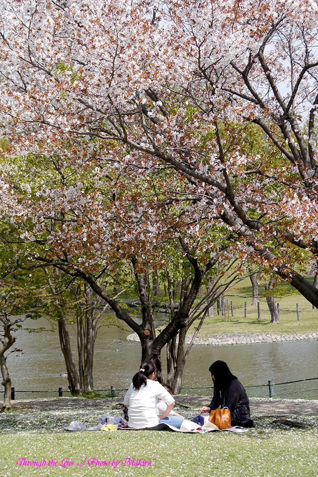 桜の下でL1