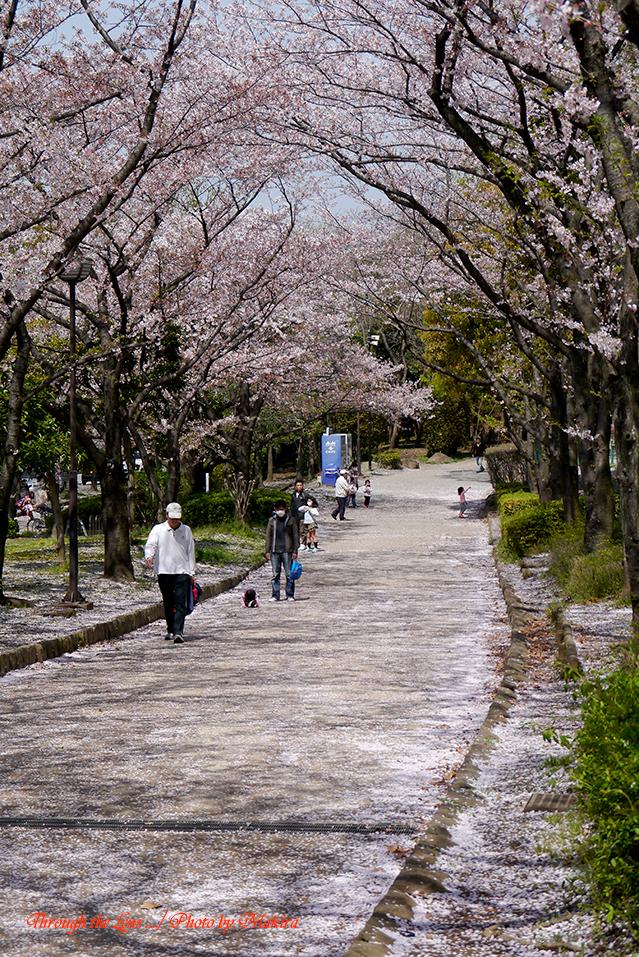 桜の下でL3