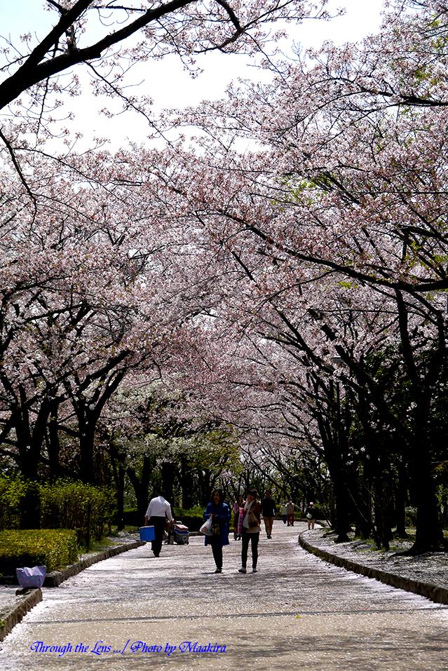 桜の下でL4