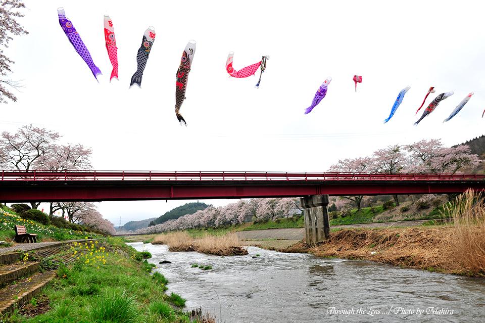橋とこいのぼり2