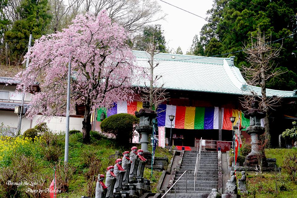 夏井諏訪神社L1