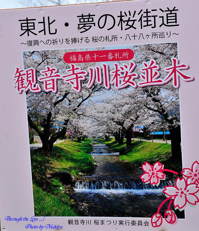 観音寺川桜並木案内1