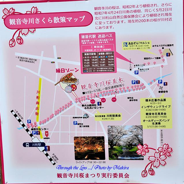 観音寺川桜並木案内2