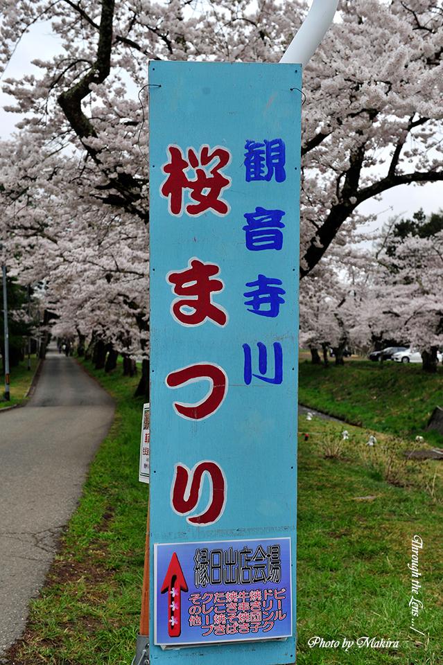 観音寺川桜並木案内3