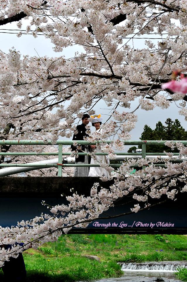 結婚式デモ撮影4