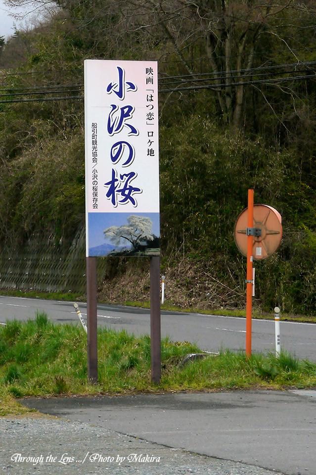 小沢の桜1L
