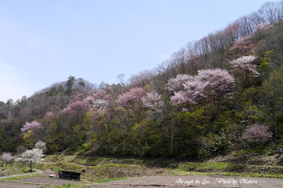 山桜L10