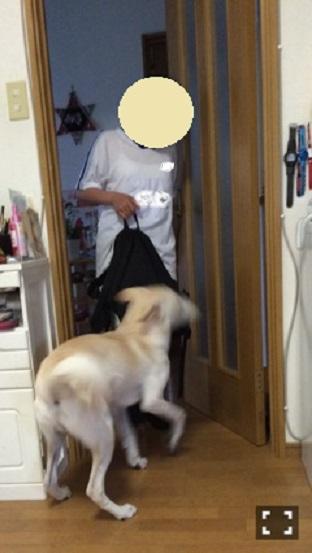カイ(げんじ)3