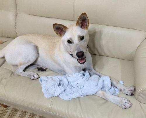 犬 ワオン(スバル)1