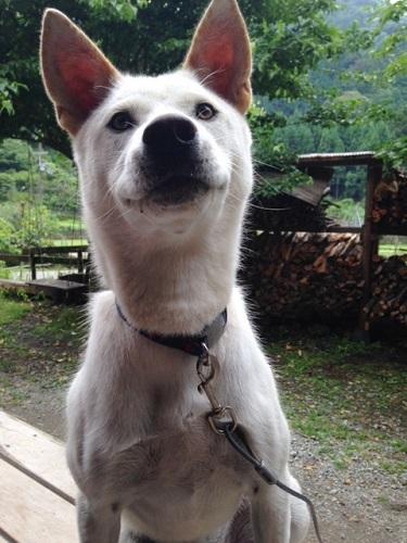 犬 くん1 (1)