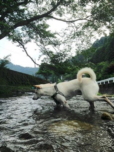 犬 くん3 (1)